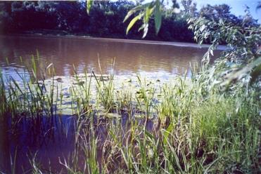 Река большой кинель берега заросли