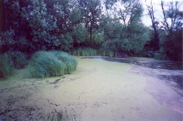 Льды на реках самарской области